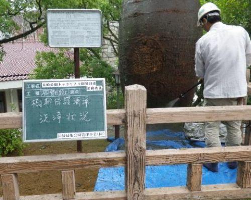 ⑧樹幹保護清掃・洗浄状況