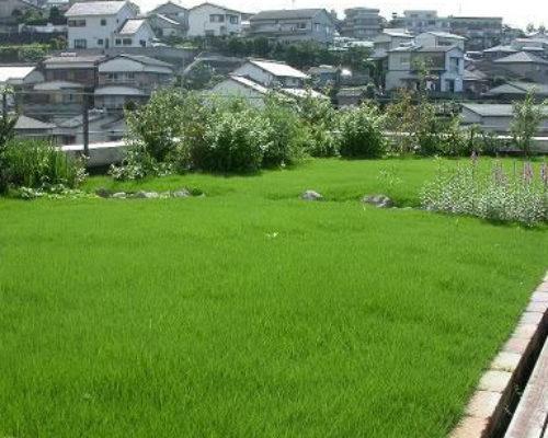 ④ ふかふかの芝生のジュータンも楽しめます。