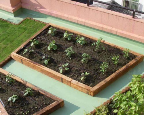 ③夏には、たくさんの野菜の収穫が楽しめそうです。