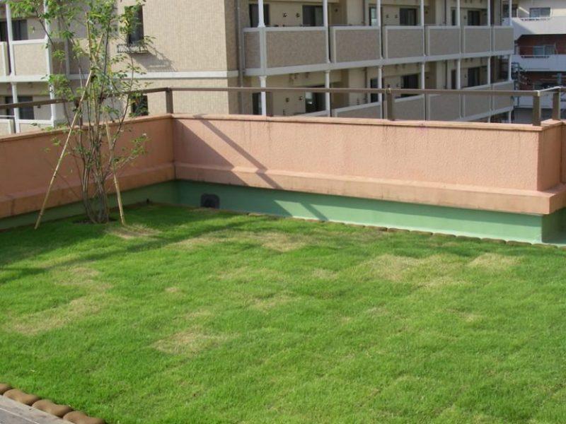 ④ウッドデッキと芝生の絨毯。実のなるジューンベリーも植えました。土厚は10cmです。