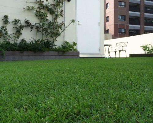 ④壁面にはツルバラと草花を植栽しました。