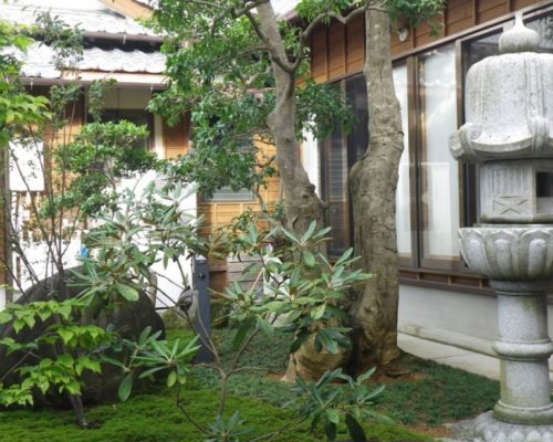 ⑧既存のクロガネモチの大木と石灯籠。