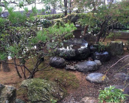 ①クロマツのある庭。