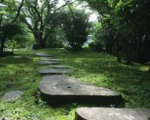 ②山モミジを主とした雑木の庭。