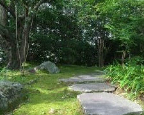 ③山モミジの大木と苔むした 庭園。