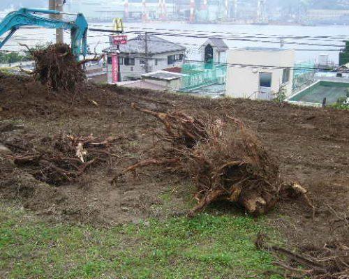 ⑦建物の建築にあたり、樹木も一部伐採しました。伐根が大変です。