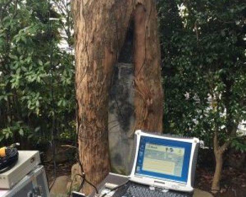 ①樹幹数ヶ所の空洞化進行状況の調査