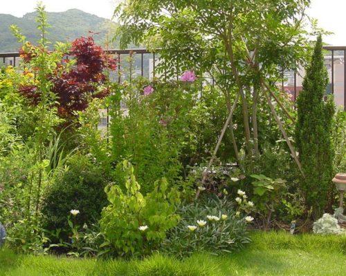 ③高木、中木それにハーブと多種混植しています。