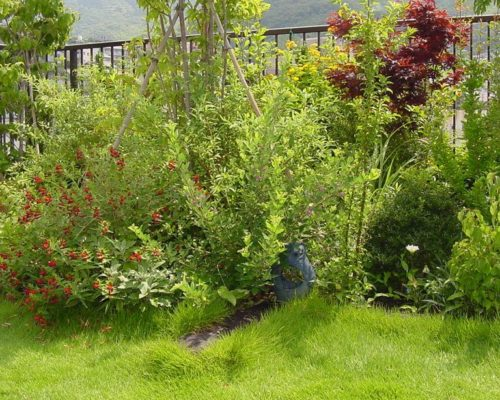 ④ルーフソイルを用いた 屋上緑化。 植物も良く育ちます!